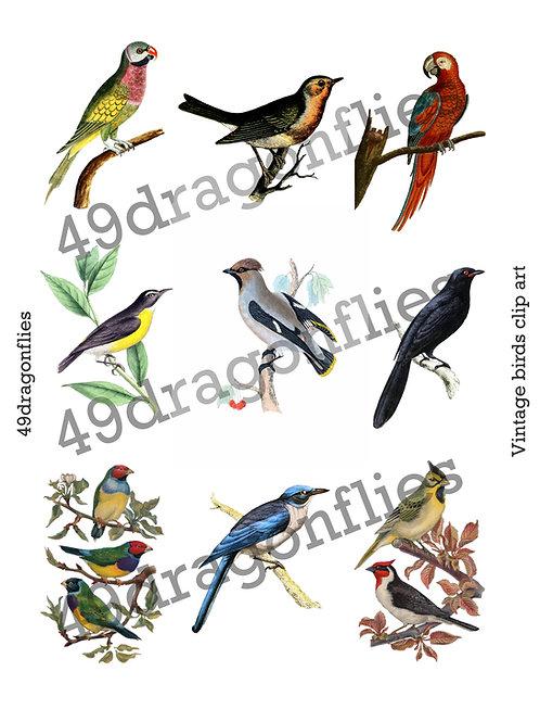 Vintage Birds Clip Art