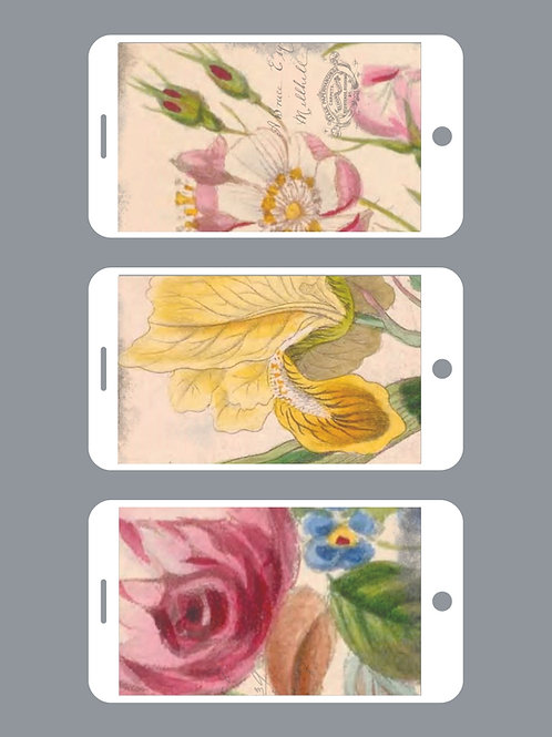 3 Phone Wallpapers, Lovely Summer Florals Set 1