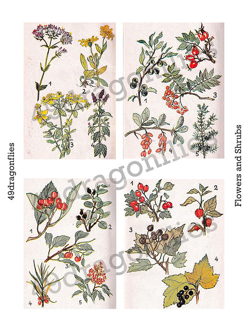 Flowers and Shrubs Vintage Book Images