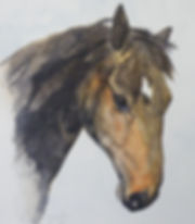 Horsehead Watercolour.jpg