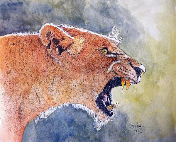 Lioness.jpg