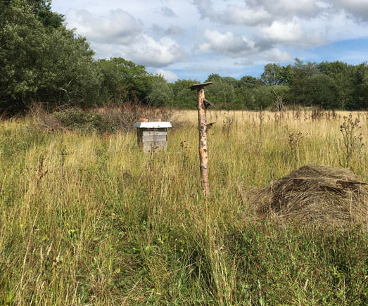 We've been making grass piles for grass snakes and dead wood poles for solitary bees and other invertabrates. We also have a hive and we are really hoping that a feral honey bee swarm moves in.