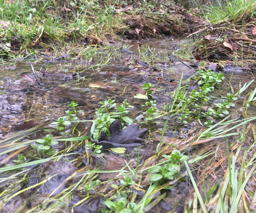 A nice bit of water vole habitat.  We are very interested in the possibility of reintroducing water voles.