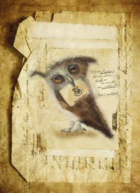 OWL postcard front.jpg