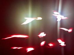 Luminaries In Flight