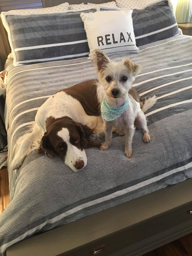 4-dog Rescue from a Backyard Breeder