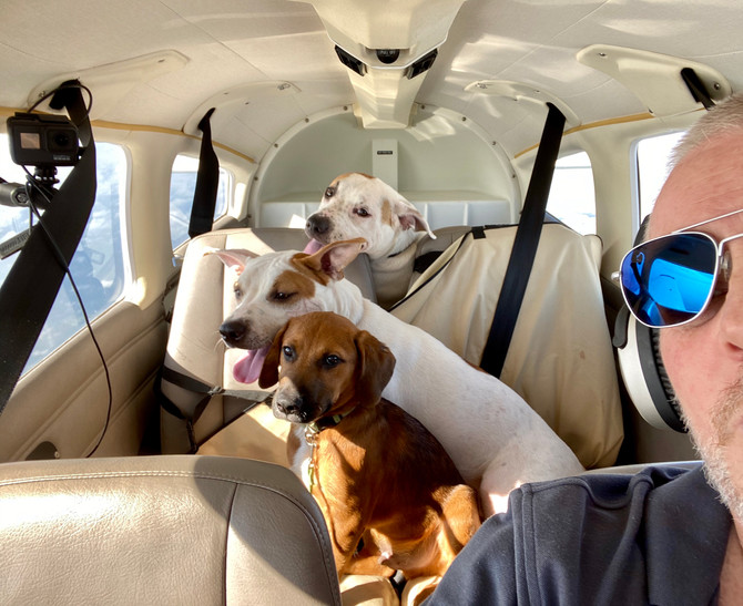 A 3 dog relay flight from North Carolina to New Hampshire