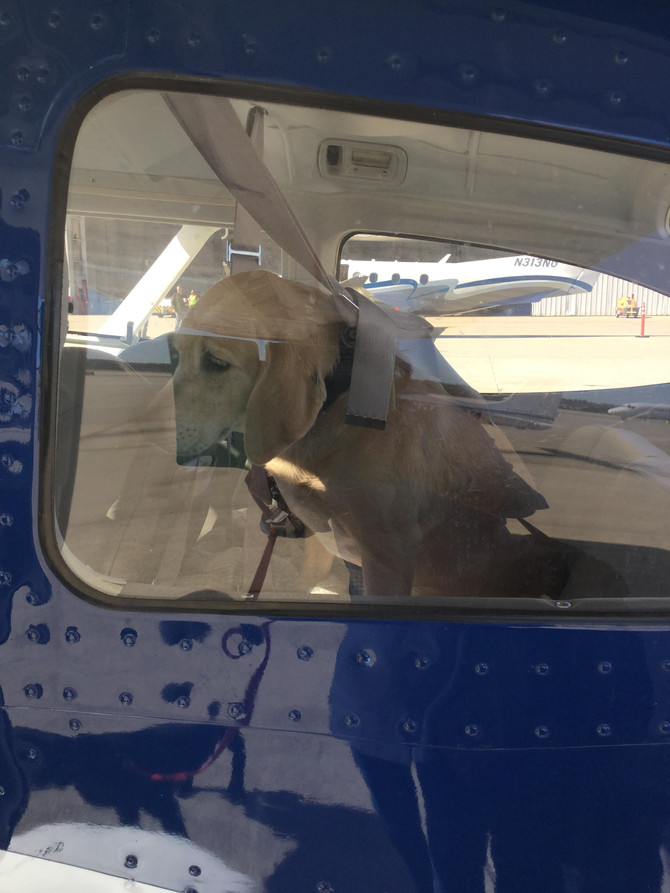 Marty and Millie Fly to Homes!