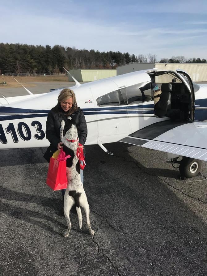 Oreo's Freedom Flight