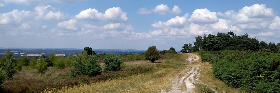 Ashdown Forest - narrow.jpg