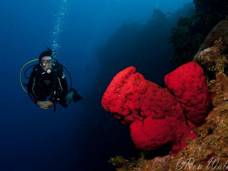 The Lowdown on the Cayman Islands | Scuba Diving Blog