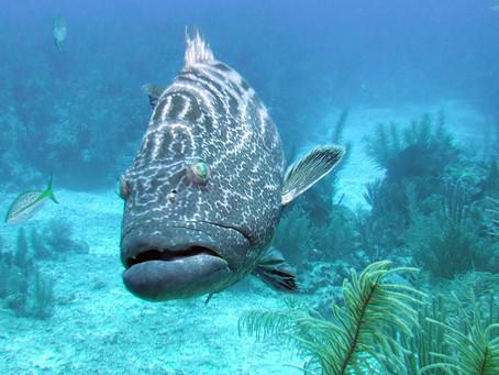 Join Our Fantastic Belize Liveaboard Trip | Scuba Diving Blog