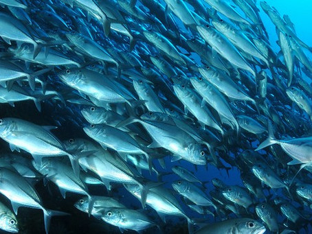 Malaysia's Best Dive Islands | Scuba Diving Blog