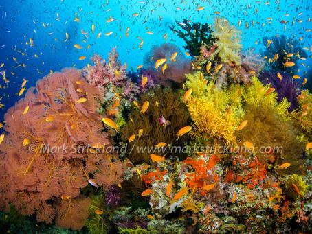 Fiji Liveaboards | Scuba Diving Blog