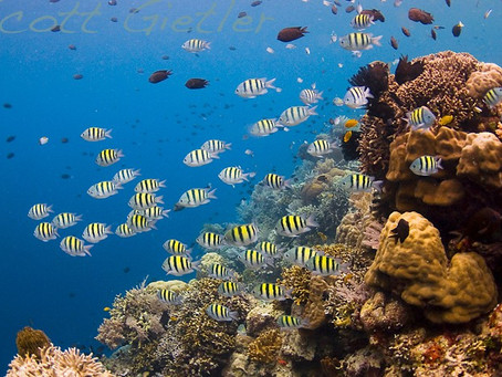 Diving Bunaken National Marine Park | Scuba Diving Blog