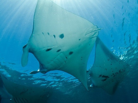 Hawaii Scuba Diving - Fun Facts | Scuba Diving Blog
