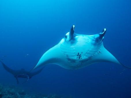 Komodo Liveaboards | Scuba Diving Blog