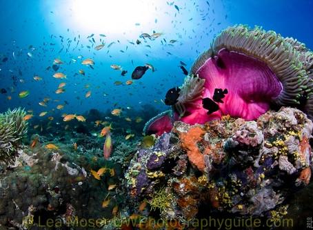 Book Your Next Maldives Liveaboard | Scuba Diving Blog