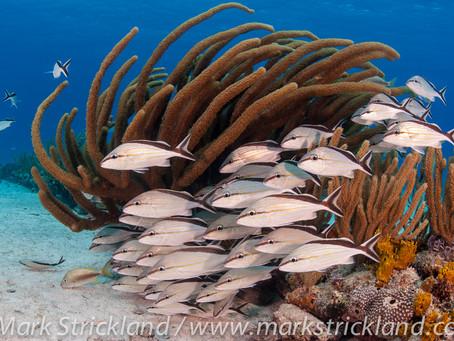 Book Your Next Bahamas Liveaboard | Scuba Diving Blog