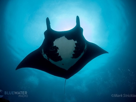 Bluewater's 'Best Of' Lists 3 | Scuba Diving Blog