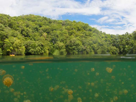 Swimming in a Jellyfish Lake | Scuba Diving Blog