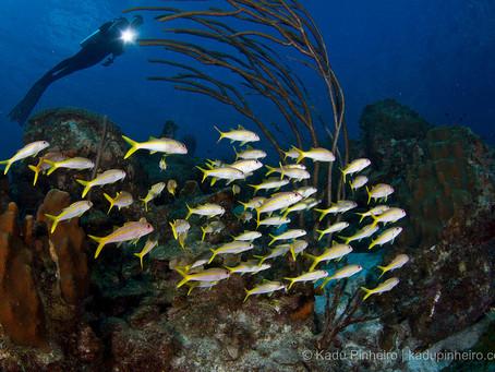 Bonaire Diving | Scuba Diving Blog