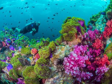 The Phuket Sandbox Scheme | Scuba Diving Blog