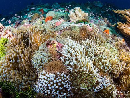 Wakatobi National Park - Fun Facts | Scuba Diving Blog