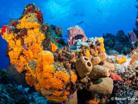 Turks and Caicos Diving | Scuba Diving Blog
