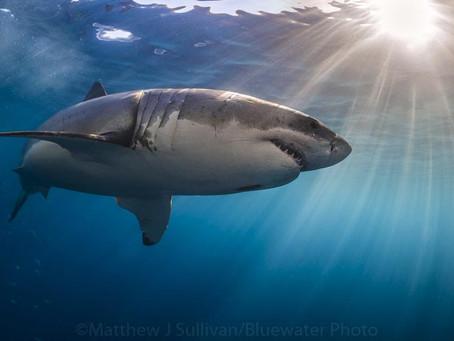 Top 5 Big Animal Encounters | Scuba Diving Blog