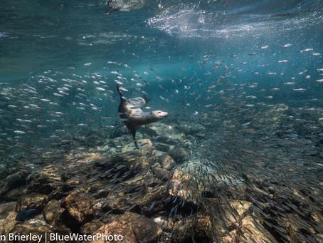 Liveaboard Scuba Trips | Scuba Diving Blog