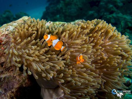 Thailand Scuba Diving - Best Spots | Scuba Diving Blog