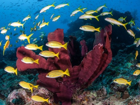 Our Favorite Great Barrier Reef Dives | Scuba Diving Blog