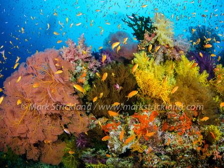 Scuba Diving Fiji | Scuba Diving Blog