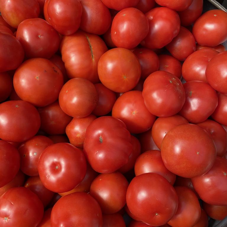Whitaker Farms Tomato Day
