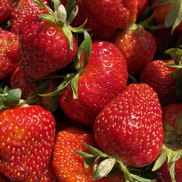 Whitaker Farms Strawberry Fair
