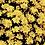 Thumbnail: Chrysanthemums