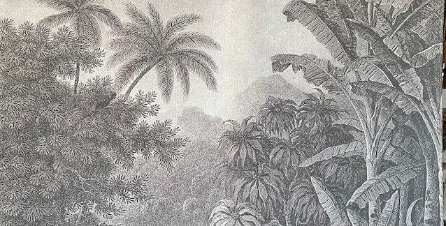 Bild Dschungel