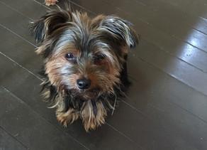 6月16日 愛犬 モモ から教えられたこと