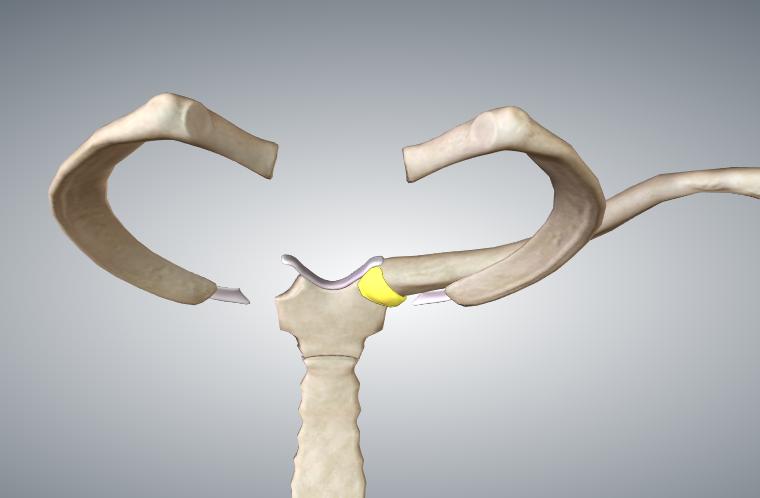 Ligamento Esternoclavicular posterior