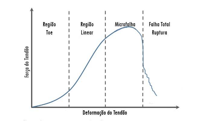 Curva de Deformação do Tendão