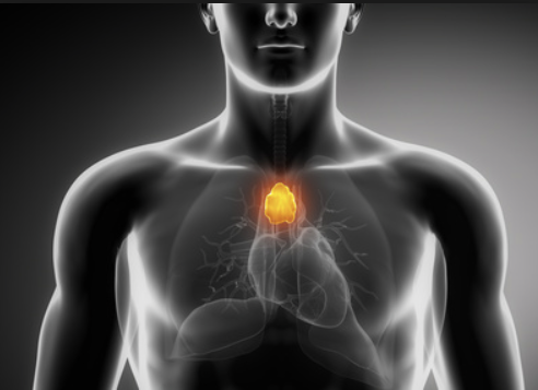 Thymus up: the hidden powers of HCAC7