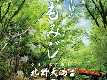 史跡土居的綠色楓樹