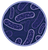 남색박테리아.png