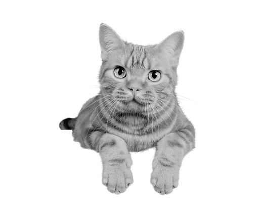 Sitting cat.png