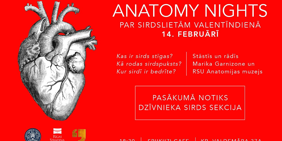 Par sirdslietām Valentīndienā. Anatomy nights
