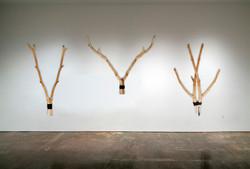 Gallery_Oh Deer