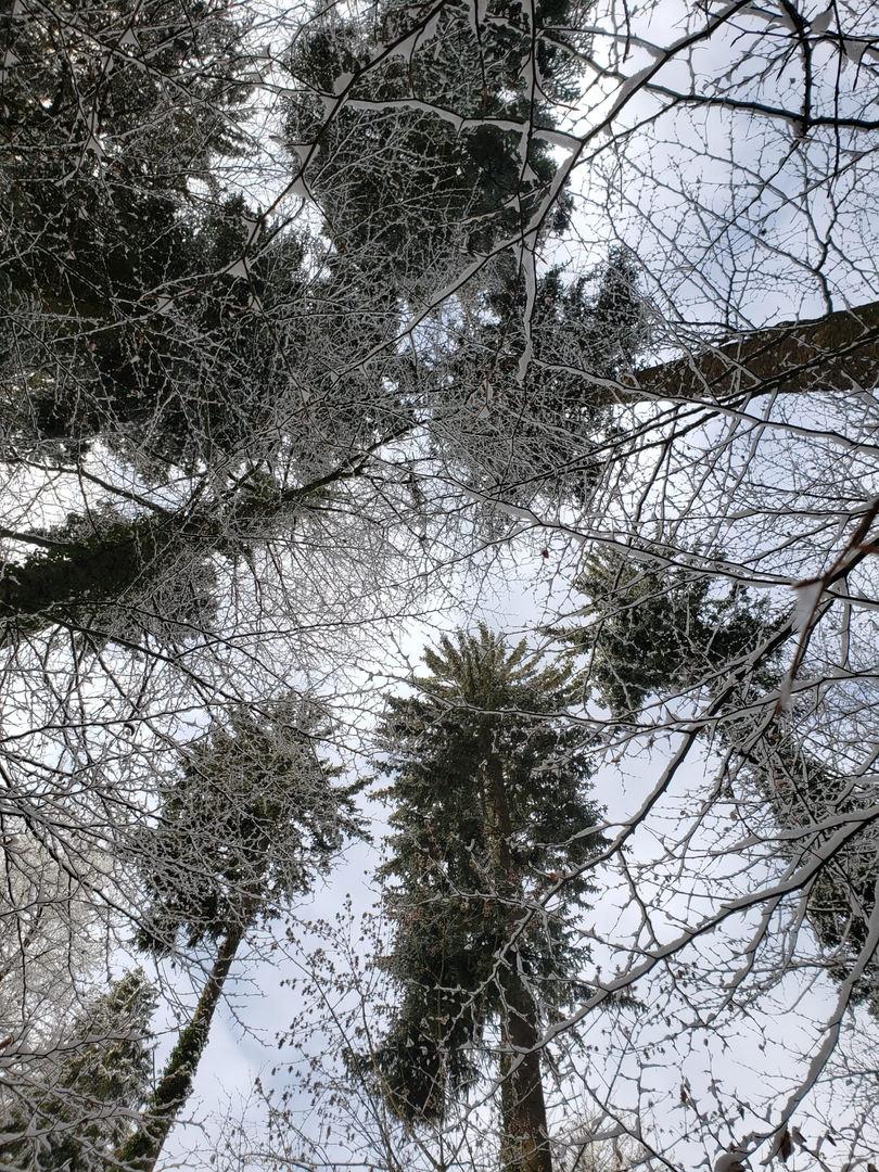 Januar 2021 unter Schneekleid