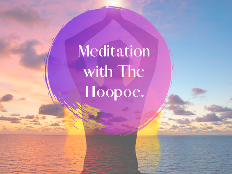 Meditation With The Hoopoe!