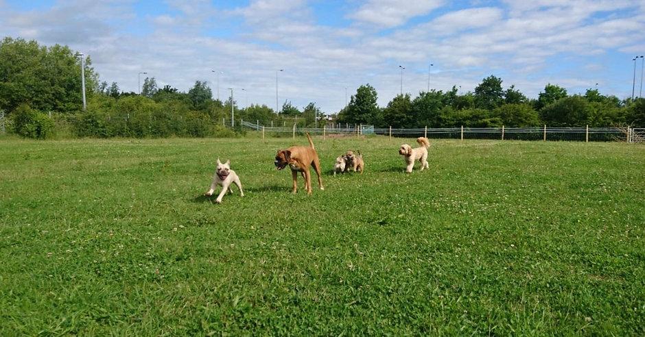 Group dog walk- Pawsome Days